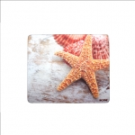 Acme Plastic Mouse Pad, sea shells Brown, PVC, Rubber, 230 x 195 x 3 mm